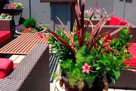 Terraza con color, paisajismo VerdeConsciente