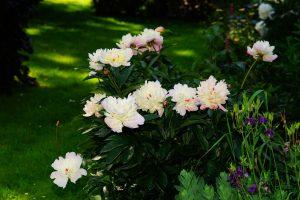 Primavera en el jardín